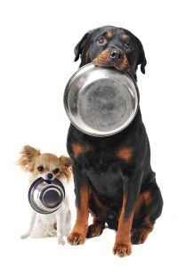 ottweiler chihuahua and food bowl